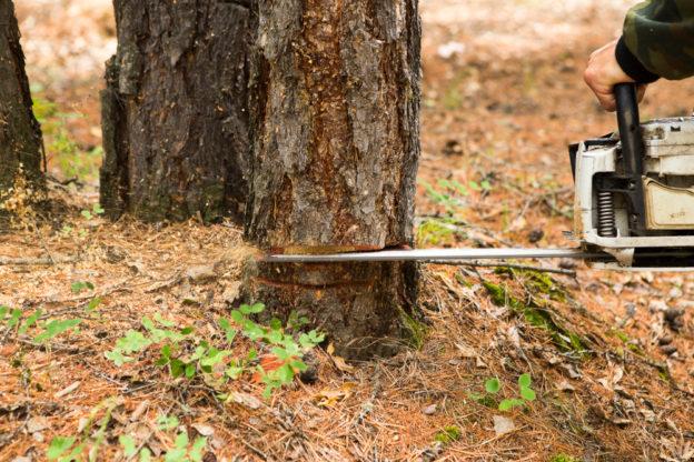 træfældning i kbh